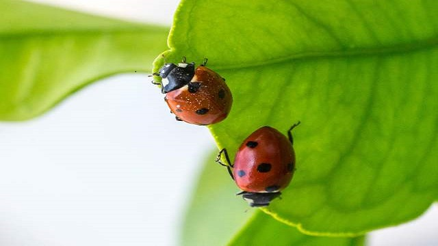 暖化讓害蟲大量繁殖 將吃掉全球兩成糧食