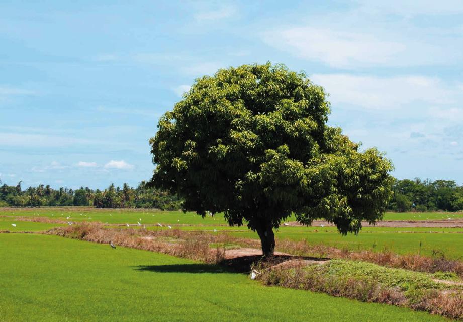 新化區黑米契作農友教育